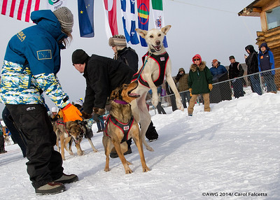 March 18 2014 Alaskan team leaders