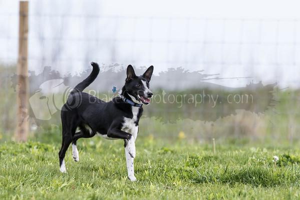 Dog Park-5-9-16_0012