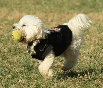 Horizons Dog Park Winston-Salem Forsyth County