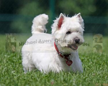 Horizon's Dog Park Photographs - 5-16-9