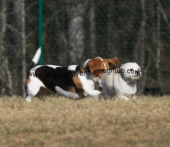 Horizons Dog Park, Winston-Salem, NC 2-7-9
