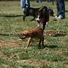 dogpark3-8-91124