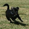 dogpark3-8-91152