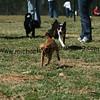 dogpark3-8-91122