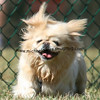 dogpark3-8-91104