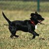 dogpark3-8-91093