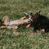 dogpark3-8-91151