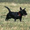 dogpark3-8-91092