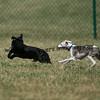 dogpark3-8-91090