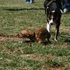 dogpark3-8-91125
