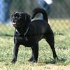 dogpark3-8-91099