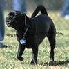 dogpark3-8-91100