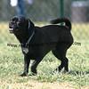 dogpark3-8-91098