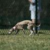 dogpark3-8-91136