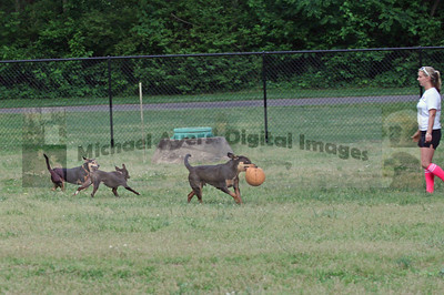 Washington Dog Park Photographs, Winston-Salem, Forsyth County