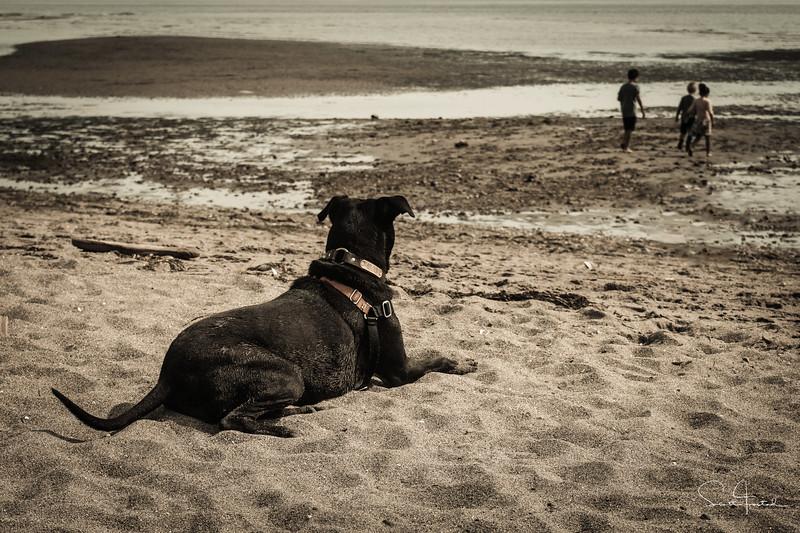 Double Bluff Dog Park,<br /> Whidbey Island, Washington