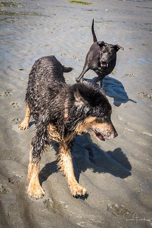 Mick & Elsie Play!