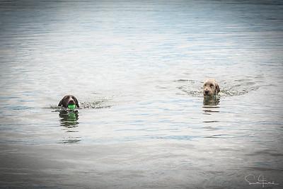 Gilda swims!