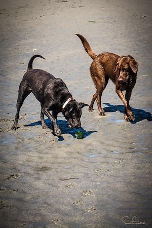 Elsie steals the ball