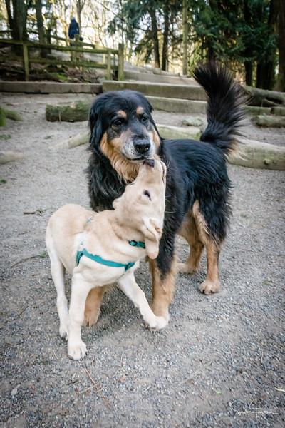 Mickey & pup