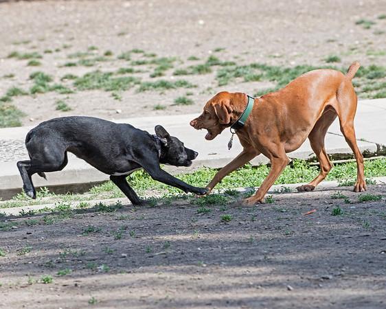 Dog Park Photos