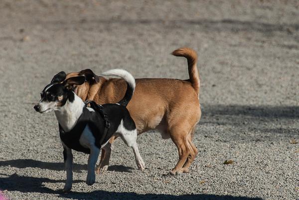 2013-10-26 Essex Co. Dog Park at South Mt. Reservation