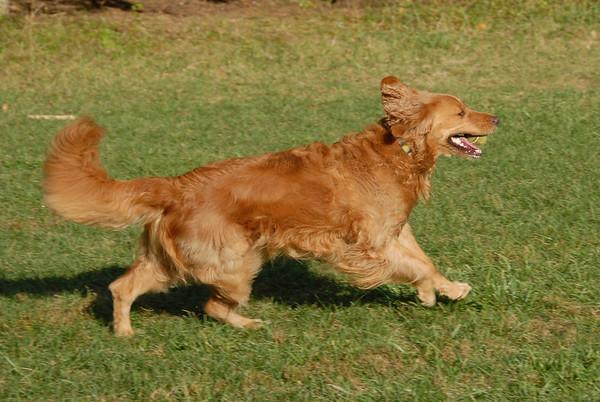 Morris County Dog Park