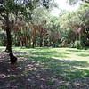 Abercrombie City Park St Pete Fl  061209 _00015