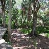 Abercrombie City Park St Pete Fl  061209 _00020