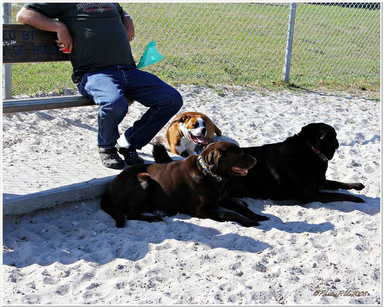 Anclote Gulf Park,paw playground,...Holiday, Florida....Mar.16, 2011