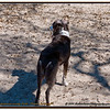 """Anderson Dog Park   Feb.20, 2010......Yup another great fresbie dog. His human says he loves the """"Snow"""""""