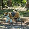Chestnut park,dogs (am workf)   2018-03-15-3150020