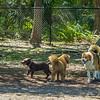 Chestnut park,dogs (am workf)   2018-03-15-3150031