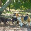 Chestnut park,dogs (am workf)   2018-03-15-3150023