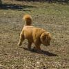 Chestnut park,dogs (am workf)   2018-03-15-3150018