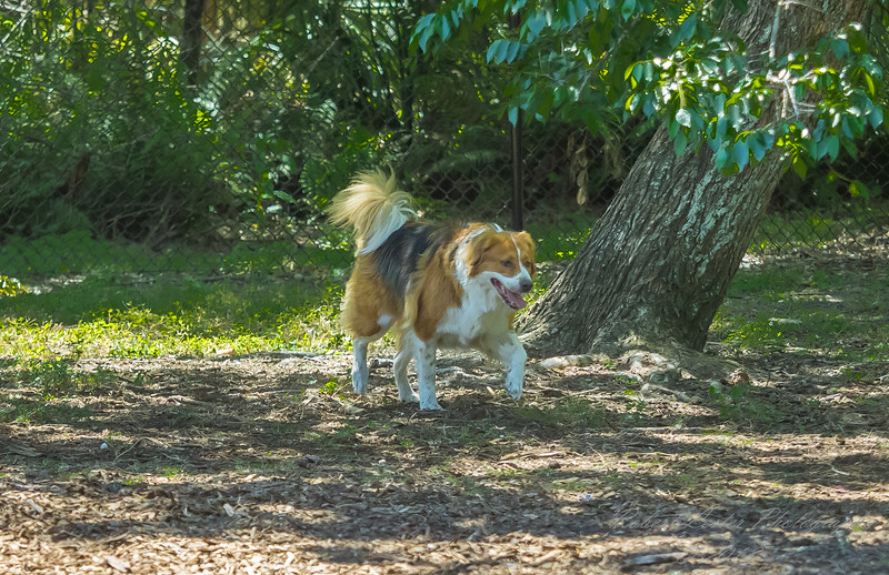 Chestnut park,dogs (am workf)   2018-03-15-3150035