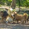 Chestnut park,dogs (am workf)   2018-03-15-3150030