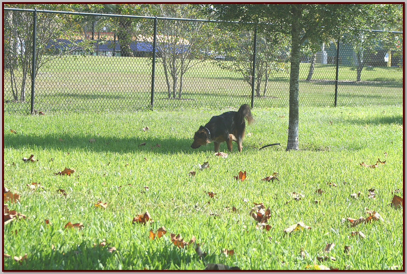 XTi 28x80mm Crest Lake Dog Park_00010fs