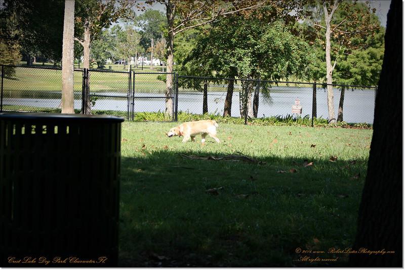 XTi 28x80mm Crest Lake Dog Park_00027
