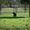 XTi 28x80mm Crest Lake Dog Park_00011