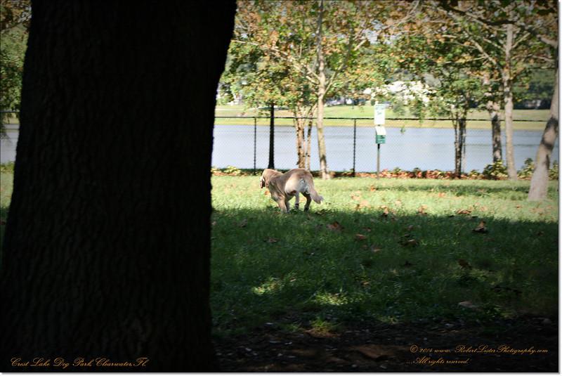 XTi 28x80mm Crest Lake Dog Park_00026