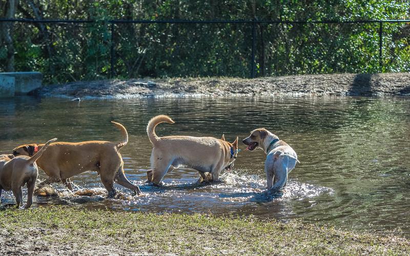 _Enterprise Dog Park  (AM blue)   2018-02-06-2060119