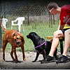 Land-O-Lakes,Florida..Dog Park..Within the Sports Complex.June2, 2012