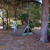 Paws Place Northeast Park Largo 020509_00007