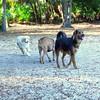 Paws Place Northeast Park Largo 020509_00021