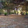 Paws Place Northeast Park Largo 020509_00009