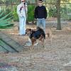 Paws Place Northeast Park Largo 020509_00025