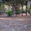 Paws Place Northeast Park Largo 020509_00008