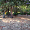 Paws Place Northeast Park Largo 020509_00018