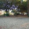 Paws Place Northeast Park Largo 020509_00031
